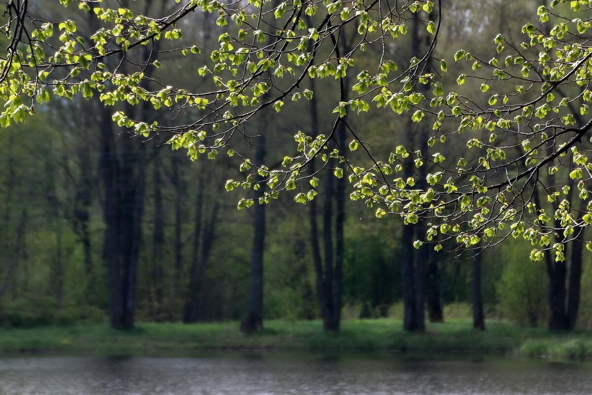 Английский парк в Петергофе