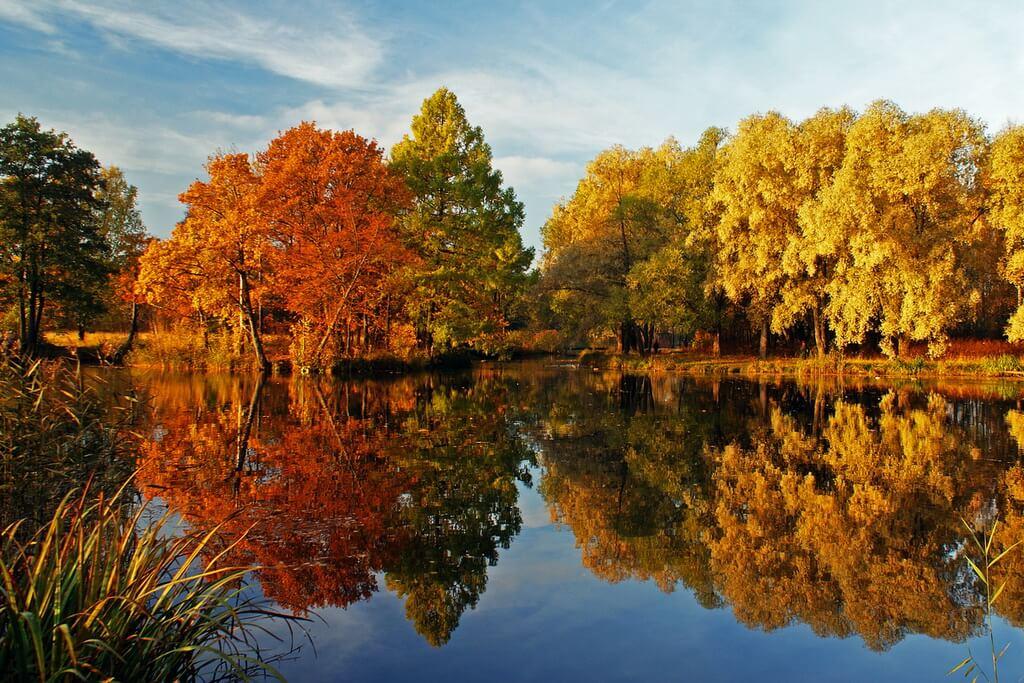 Осень в Английском парке