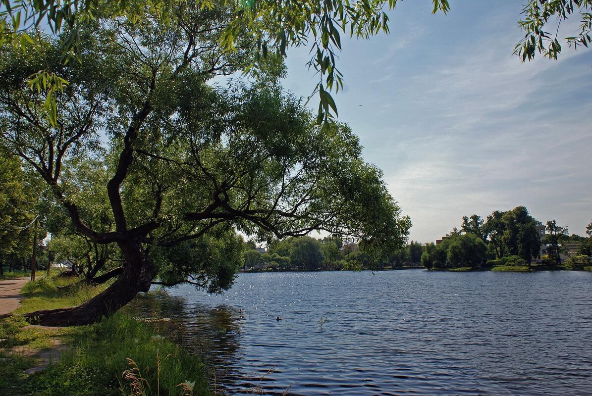Колонистский парк в Петергофе