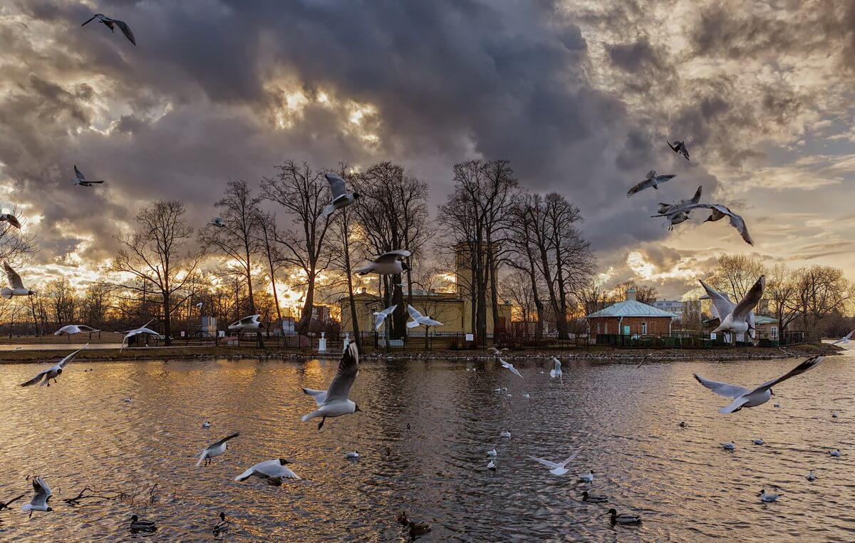 Колонистский парк вид на Ольгин павильон