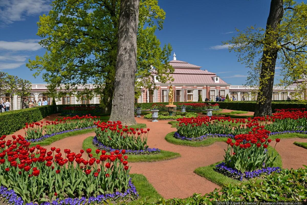 Нижний парк. Дворец Монплезир